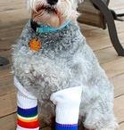 Rainbow Dogs! / by Pride Socks