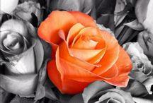 Orange / Flowers