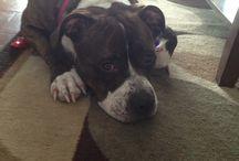 My pitbull Zada / Just a few pics of my baby <3