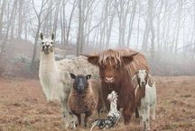 Mammifères et autres bestioles