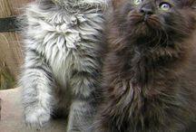 Catz / Just...catz :)