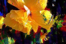 Flora  / Leaves / Fruit Art / Flowers, Leaves etc...