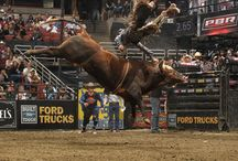 BULLS - BULLS . . . / And The Cowboys That Try To Ride Them / by Sandy Kadlec Schafer