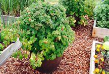 plants to grow / by My Garden Nursery