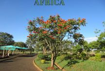 Africa The Second Largest and Populous Continent in the World
