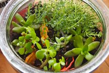 TERRARIUMS / I want to make some in the glass containers I don't want to throw away.