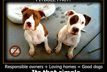 For the love of a pit bull / by Nova Smith