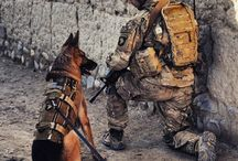 Military Dogs / I pay homage to the brave men, women and their dog partners who defend us - what brilliant teams they are.