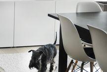 Interior-Dog