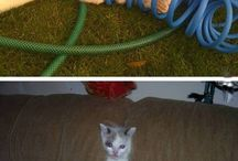 critters / animals and pets