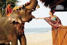 Unhas tailandia