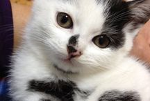 Gatti / animali
