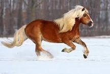 paarden / Love paarden!