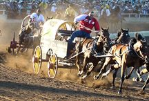 Calgary Stampede - Greatest Outdoor Show on Earth / Rodeo on Steroids