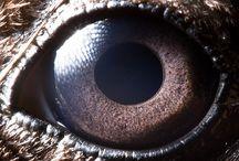"""Gli occhi degli animali visti da vicino, da molto vicino! / """"Animal eyes"""" è il nome del progetto di Suren Manvelyan, il fotografo armeno che ha immortalato gli occhi di decine di animali a distanza davvero ravvicinata.  Il risultato? Una galleria di colori incredibili e particolari dettagliatissimi, impossibili da notare ad occhio nudo e che sembrano quasi delle immagini satellitari di laghi o di crateri vulcanici.  La serie completa è visibilesul sito di Suren Manvelyan  www.surenmanvelyan.com  Scopriamo insieme di che tipo di animali si tratta!"""