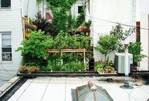 Urban Farming / by Petunia
