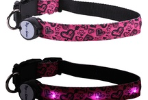 Lighted LED Collars