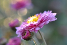 flowers & animals