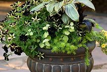 Gardening ( Containers)