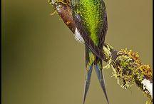 Birds &Hummingbirds