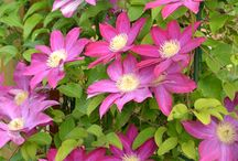 Pink / Plants and accents in pink for your garden,