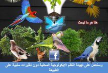 Comprendre Le Papillon Source EL4DEV en images - Français et Arabe / http://www.el4dev.com/papillon/