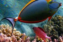 Coral, Sea, Fish