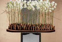 Растения ресторан