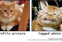 Funny cuz it's true!  / by Tara Jones