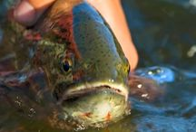 Best Fly Fishing Rivers / What are the best rivers to go fly fishing? Here they are!