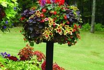 Garden and Outdoor ideeas