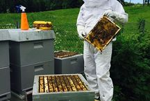 BEES and HONEY / The life of a beekeeper and his beehives: Bees, these tiny little flying creatures, so powerful, purposeful and productive. Bee products and their usage. Technology.