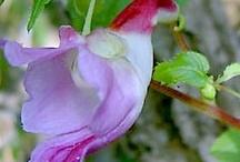 Frumusetea florilor