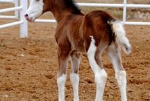 Fancy Foals / Our cute foals we have running around here on the Farm