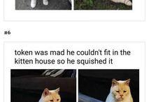 Morsomme katter