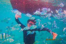 FreediveAsia
