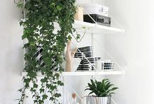 Green indoor inspo