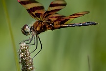 animals , birds and insects / all the creatures that flutter, fly, scamper and run