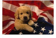 Patriotic Puppies / by Cherry Tree
