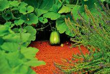 Садоводство Боде