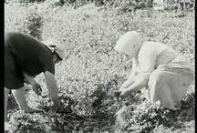Video sulle tradizioni pugliesi