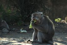 WILDLIFE PHOTOGRAPHY / Its all bout candid photo, wonderful place with monkeys and all of this is a natural life