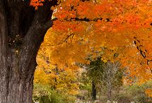 Fall in New England / by Lori Pedrick