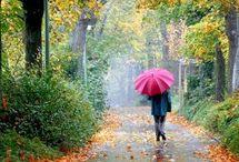 Rain / by Pamela Durning