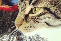 meow *.*