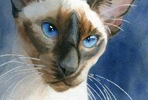 akwarela-koty
