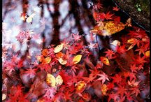 fall-automne-toamna