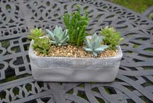 Succulent Planters of Yesteryear / Succulent planters that have been available in the past