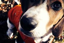 Charlie Bear's Bear Crunch Facebook Contest / Have you heard about our newest contest with Charlee Bear? We'll be featuring all our entrants here. Get all the details and find out how to enter here: http://goo.gl/F4CLM2 / by Animal Behavior College