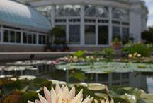 NYC - Naturopolis / The Green Revolution: Urban ecology, rooftop garden, urban farming, community garden, locavore, biking, ... www.greenthumbnyc.org --- NYC Parks: Central Park, Bryant Park, Washington Square park, Battery Park,  Brooklyn Bridge Park, FreshKills Park- Staten Island,  Riverside Park, ... / by martine besseteaux